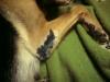 Ela- zachranena 2011 z mnozirny. stastne adoptovana 2012